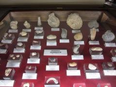 Fósiles extranjeros