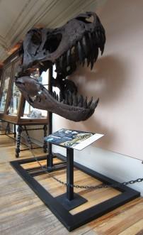 El monstruoso Tyrannosaurius Rex