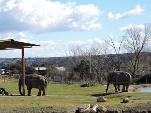 Elefantes paseando sin prisa pero sin pausa