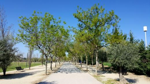 Árboles con look renovado