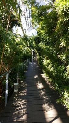 Entre bambúes...